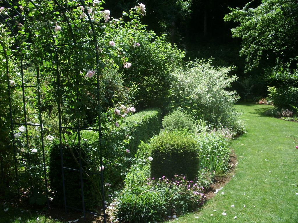 Les pins noirs les buis une production maison - Hormone de bouturage maison ...