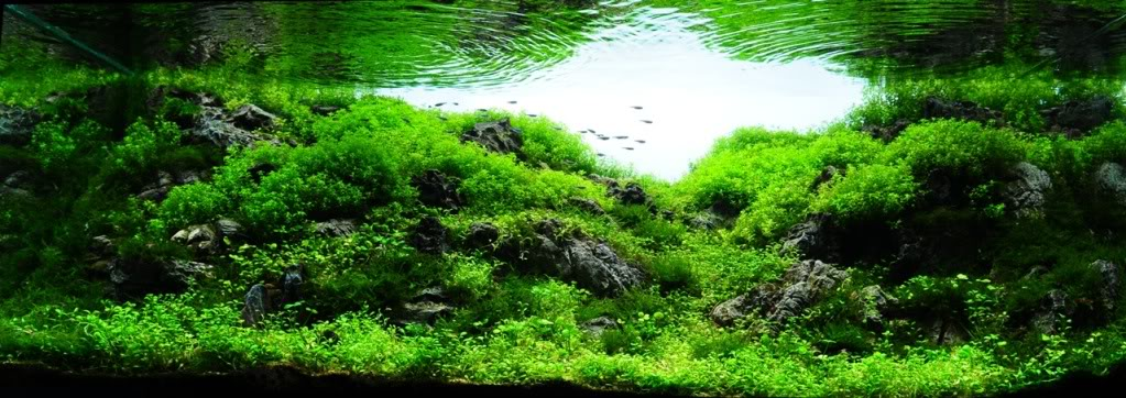 your freshwater aquarium, tropical fishes and plants: Aquascaping ...