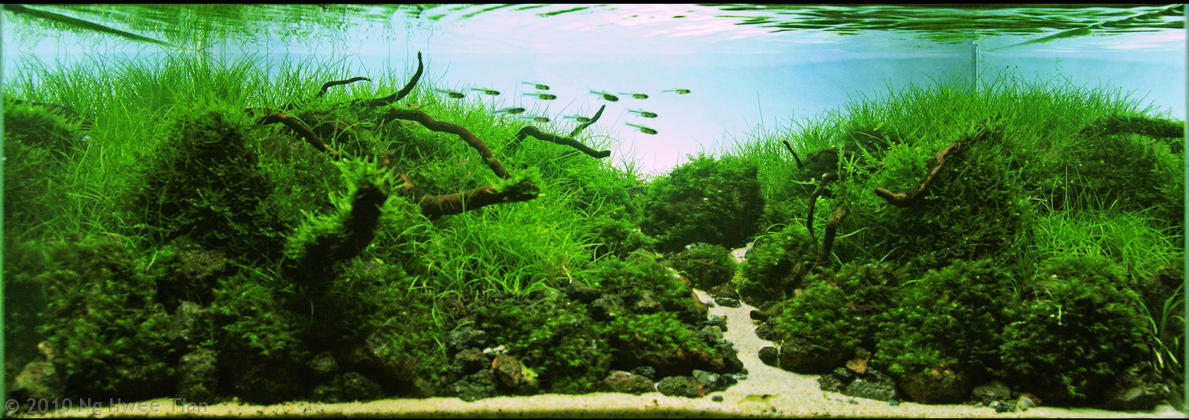 your freshwater aquarium, tropical fishes and plants: AGA Aquascaping ...
