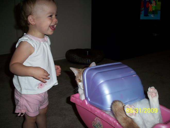 Maddy pushing the cat around