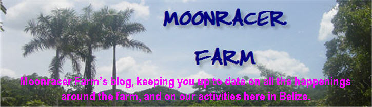 Moonracerfarm Belize