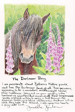 The Dartmoor Pony