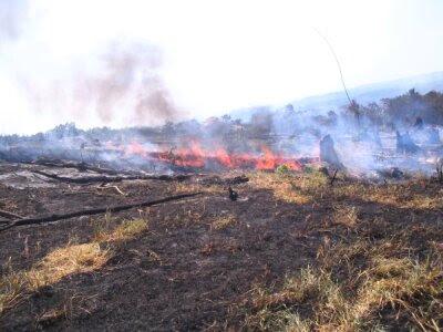 Incendios forestales casi 10000 hectareas se quemaron