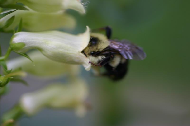 [jun+15+bee+1]