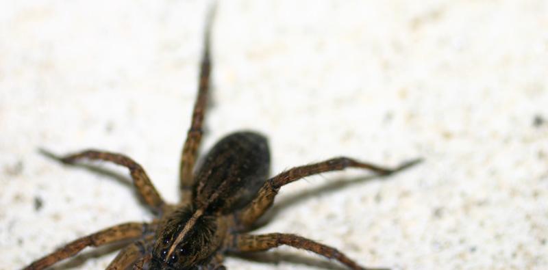 [jun+15+spider+2]
