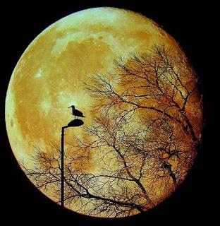Bela foto nocturna de um pássaro em cima de um candeeiro com a lua como cenário