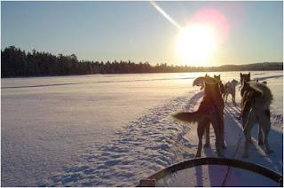 Cães puxam trenó em direcção ao nascer do sol