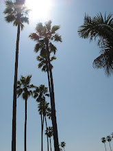 Palm trees make me happy.