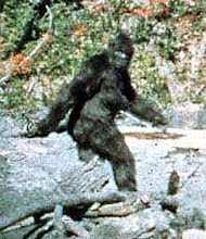 Frame 352 of The Patterson/Gimlin Movie