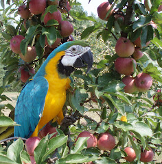 Cyrus in apple tree