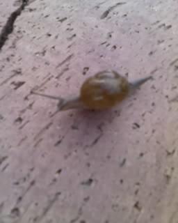 [stinky+snail.aspx]