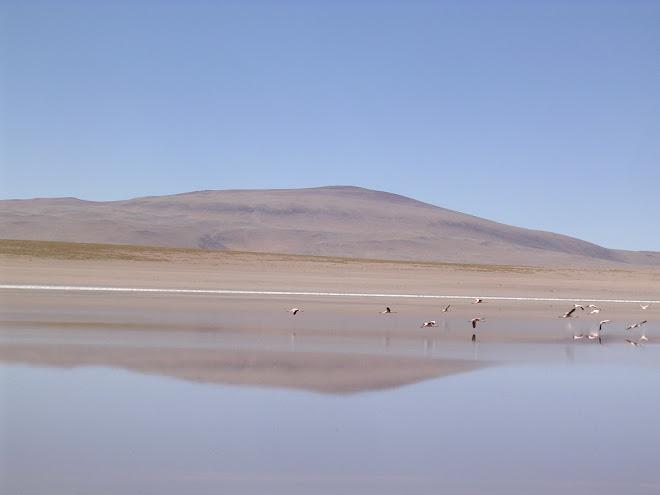 Les flamands du Salar d'Uyuni