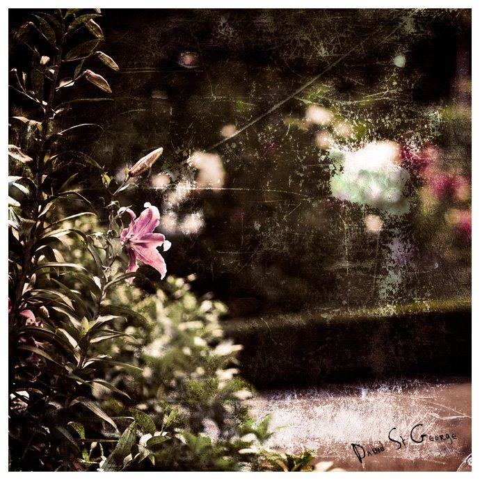 [Flower_DST43004.jpg]