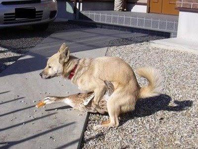 """Fico imaginando um estudante de veterinária buscar """"cachorro com a"""