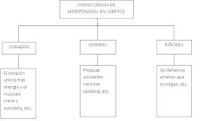 external image MAPA+COGNITIVO+DE+CAJAS.jpg