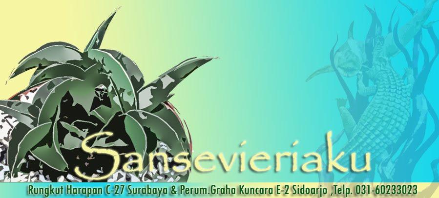 Sansevieria, Surabaya Sansevieria, Pameran Sansevieria