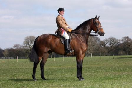 K K Horse Country Uk Ltd ... the Open Hunter Championship with Robert's wife, Sarah, on board