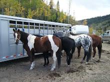Horses at camp