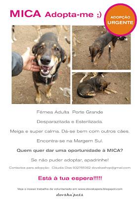 Mica - A cadelinha SRD mais meiga do mundo ;) Margem Sul Mica