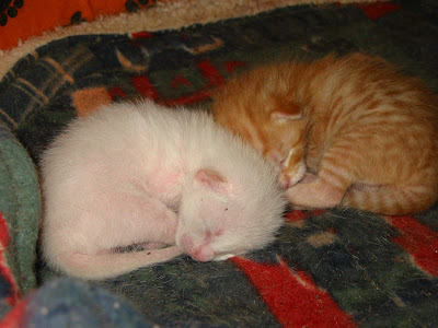 KAT - Gatinha branca nascida a 26 de Abril 09 para ADOPÇÃO 180-8021_IMG