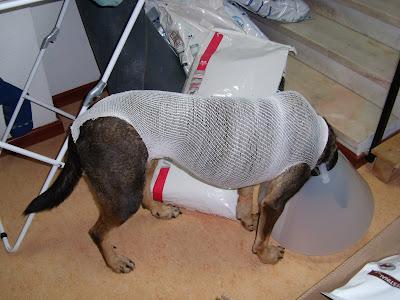 Mica - A cadelinha SRD mais meiga do mundo ;) Margem Sul SL272190