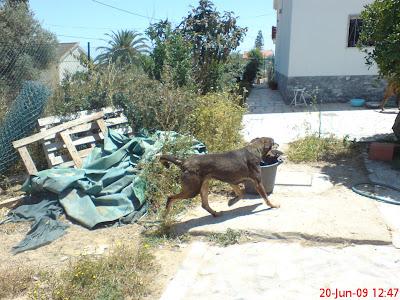 Mica - A cadelinha SRD mais meiga do mundo ;) Margem Sul Leaomica