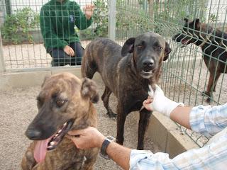 Kim e Oreo > Castro Laboreiros para adopção URGENTE P9010128