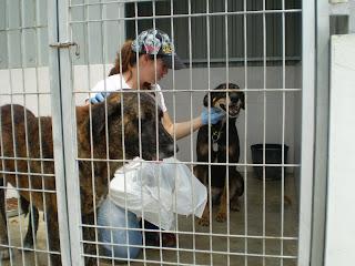 Mica - A cadelinha SRD mais meiga do mundo ;) Margem Sul Fotos+leao+,+micas,+material+para+blog+011