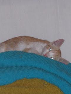 Star e Samantha > Duas gatinhas pequerruchas para adopção! IMG_1225
