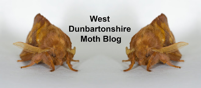 West Dunbartonshire Moth Blog