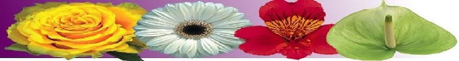 Plantas,Flores,Plants,flowers,Pflanzen,Blumen,blomster,piante,fiori,पौधों और फूलों से,植物和花卉
