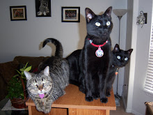 Tigger, Shadow & Midnight