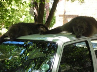 aw dude you know I'd totally get off your car if I could but I suddenly became so fucking fat as soon as I lay down here