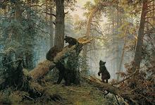 Mañana en un bosque de pinos