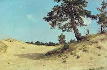Un pino en la arena
