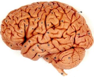 Otak Tetap Aktif Meskipun Kepala Sudah Terpenggal