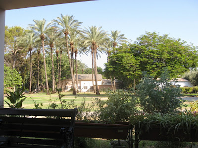 View of lawns and palm trees