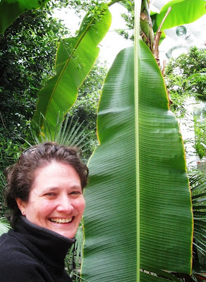 Lola II in front of a large banana leaf in the Temperate House
