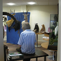 A room containing stuffed deer heads and a stuffed badger