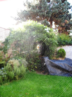 Spider in the centre of an unfeasibly large web