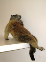 A stuffed marmot sitting up on shelf with crossed legs