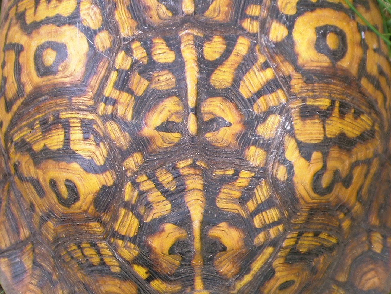 turtle shell pattern - HD1440×1080