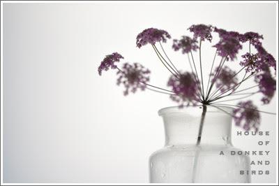 花,レースフラワー,lace flower