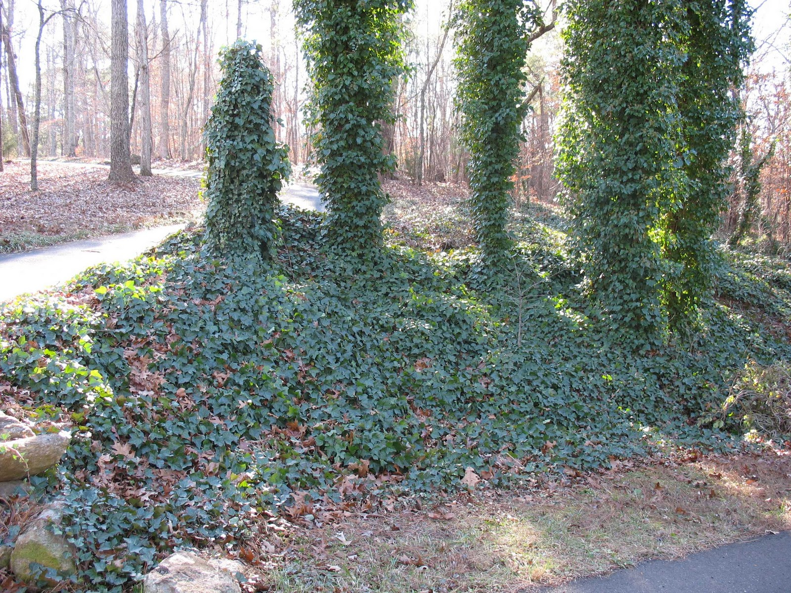 how to kill weeds in the winter