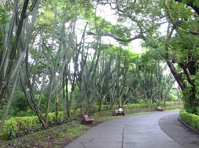Aarey milk colony in Goregaon