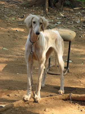 Winning dog Karjat dog farm