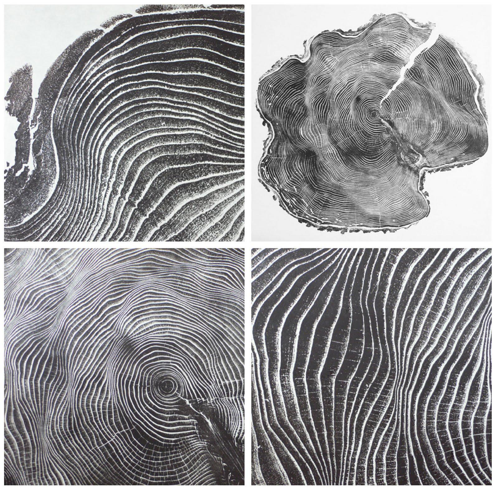 Tree Ring Printmaking