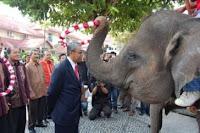 Gajah Lia mengalungkan bunga