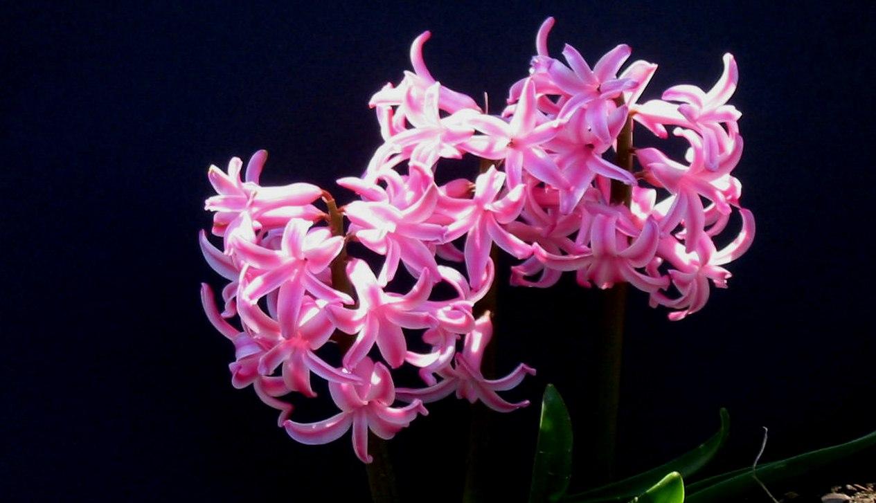 The Moonlight Gardener Spring Flowers