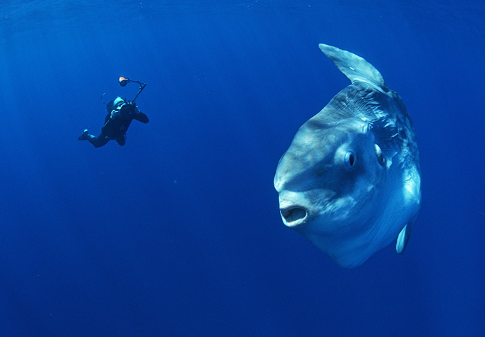 Fly fish addiction name that saltwater fish for The mola mola fish